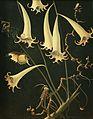 Franz Sedlacek - Blumen und Insekte.jpg