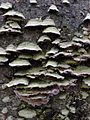 Fungus 272904644.jpg