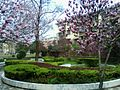 Fuyang Teachers College Qinghe Campus Blossoms.jpeg