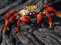 Galápagos Inseln, Ecuador (13898724411).jpg