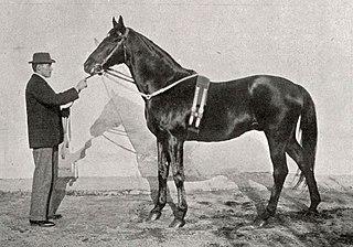 Galliard (horse) British-bred Thoroughbred racehorse