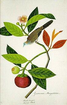 William Farquhar - Wikipedia, la enciclopedia libre