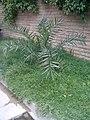 Garden's 16.jpg