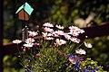 Garden Bouquet (231710542).jpg