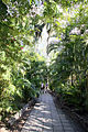 Garden path Hemingways House (3204555958).jpg