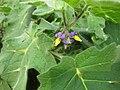 Gardenology.org-IMG 7332 qsbg11mar.jpg
