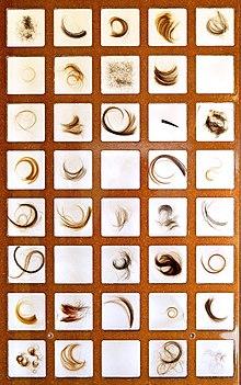 muestras de cabellos, con distintas tonalidades del color del pelo