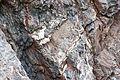 Gesteine am Ufer der Urft im Nationalpark Eifel-3532.jpg