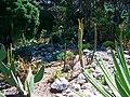 Gibraltar Botanic Gardens cacti bed.jpg