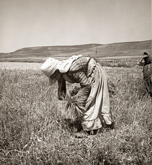 Alawites - Alawite woman gleaning in 1938