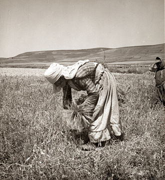 Alawites - Alawite woman gleaning in 1938