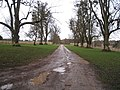 Grand approach to a grand house - geograph.org.uk - 1728491.jpg