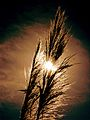 Grass Sky Sun 2.jpg