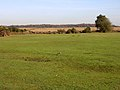 Grassed area at Leaden Hall, New Forest - geograph.org.uk - 81013.jpg