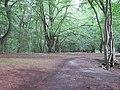 Great Monk Wood - geograph.org.uk - 2500920.jpg