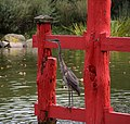 Great blue heron on torii (70296).jpg