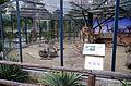 Guinea pig - QRpedia at Skopje Zoo general.JPG