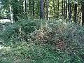 Hügelgrab Bahnriegl 3.jpg