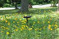 HL - Butterfly Garden (5885450806).jpg