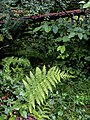 HOHRainForest-OlympicNationalPark1.jpg