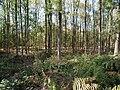 Hambach forest 54.jpg