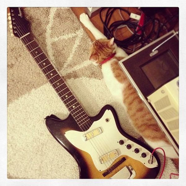 File:Harmony H15 Bobkat & Cat.jpg