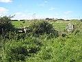 Hedge near Downs Barn Farm - geograph.org.uk - 1326545.jpg