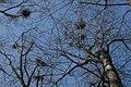 Heron Nests (6788988852).jpg
