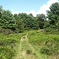 Hiking in Pike County Pennsylvania.jpg