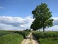Hoegaarden - panoramio (2).jpg