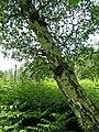 Holme Fen, Cambridgeshire (48092342197).jpg