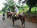 Horses in Costa Rica.jpg