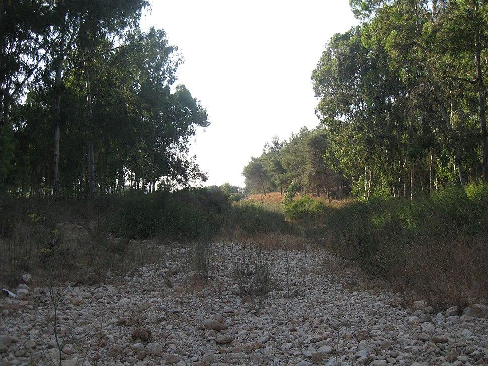 Horshim wood021