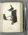 House Wren. 1. Male. 2. Female. 3. Young. (In an old Hat.) (NYPL b13559627-108378).tiff