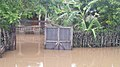 House during flooding in Ouanaminthe.jpg