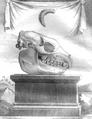 Hyrax Buffon 1789.png