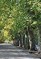 IMG 4319-1 Ponte de Lima (6337706447).jpg