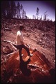 INDISCRIMINATE LOGGING HAS DESTROYED TIMBER ON SLOPES OF THE REDWOOD CREEK WATER SHED, CAUSING - NARA - 542864.tif