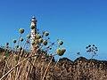Il Faro, tra aglio selvatico e finocchio marino.jpg