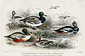 Illustration from A History of the Earth and Animated Nature by Oliver Goldsmith from rawpixel's own original edition of the publication 00065.jpg