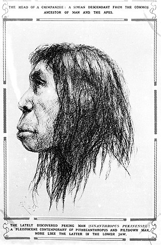 "Pierre Teilhard de Chardin - Sketch of ""The Lately Discovered Peking Man"" published in The Sphere."