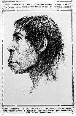 Illustration of Piltdown Man (Eoanthropus). Wellcome M0001114