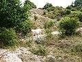 In de duinen achter camping Rondeweibos - panoramio (2).jpg