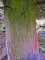 Inscribed stela under thatched roof, Plaza of the Stela, Ni Li Punit Maya site, Belize.jpg