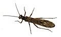 Insecto. A Estrada. 26-03-09. B.jpg