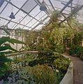 Interieur, sfeeropname van de tropische kas met vijver op de voorgrond - Haren - 20334351 - RCE.jpg