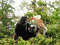 Ishikawa Zoo - Animals - 40 - 2016-04-22.jpg