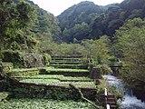 Izu city, Ikadaba, Wasabi fields 20111002 B.jpg