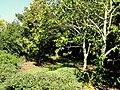 J. C. Raulston Arboretum - DSC06237.JPG