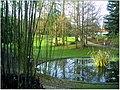 January Frost Botanic Garden Freiburg - Master Botany Photography 2014 - series Germany Saphir pictures - panoramio.jpg